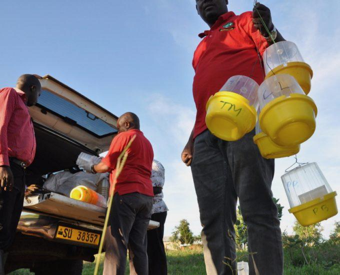 Tanzania: Fruit Fly Survey