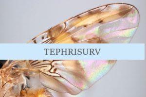 TEPHRISURV LOGO