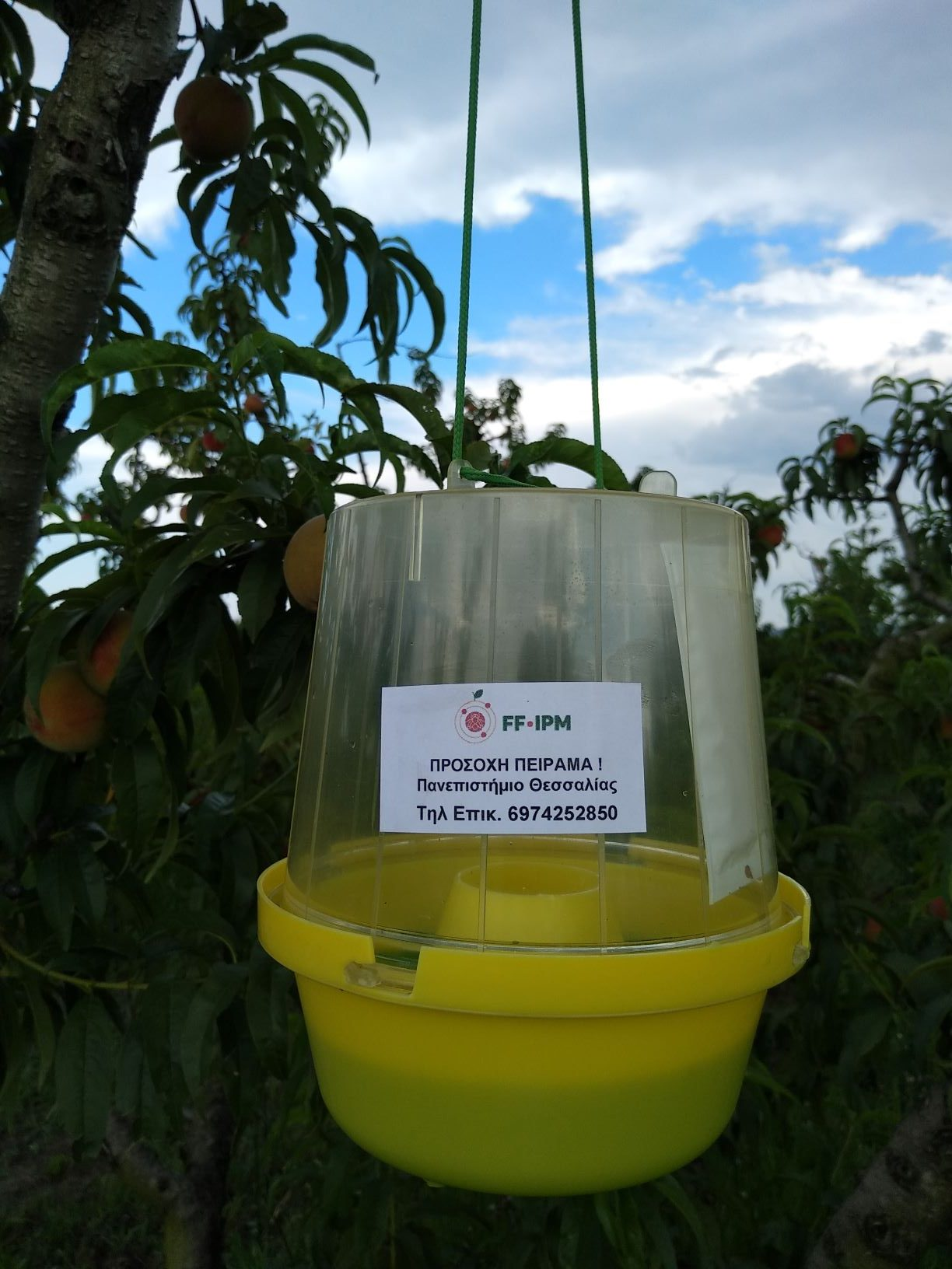 OFF-Season applications of the entomopathogenic fungus Beauveria bassiana (UTH)